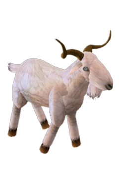 The gallery for -->... Goat Animation